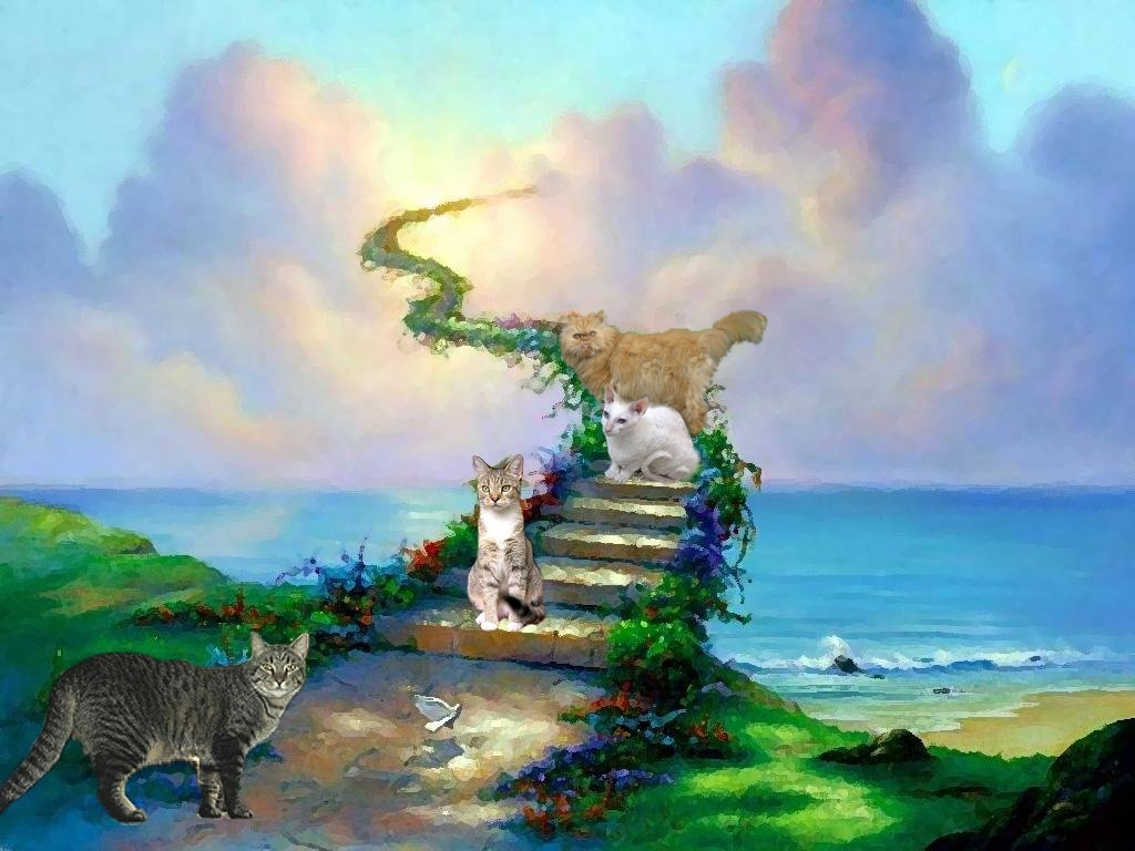 Do Dogs Have Souls And Go To Heaven